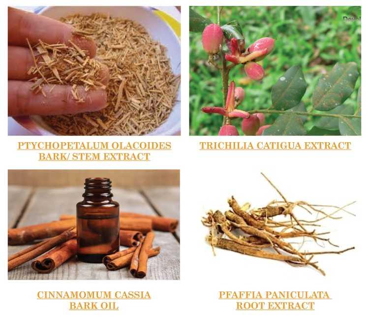 Thành phần chính có trong kem tan mỡ bụng Riori Hot Gel Massage chiết xuất từ các loại thảo mộc thiên nhiên